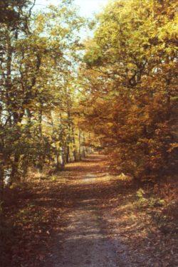 chambiers_en_automne