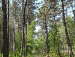 foret_de_chambiers
