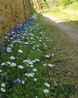 Des fleurs pour vos pieds de murs